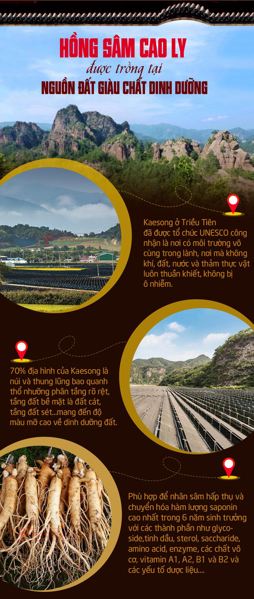 Hồng Sâm Cao Ly Triều Tiên 6 Năm Tuổi Nhập Khẩu Hộp Thiếc 75g