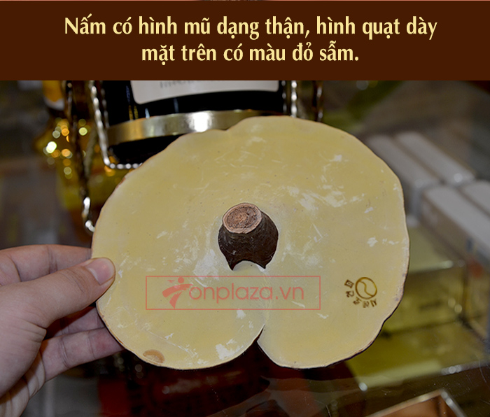 Nấm linh chi vàng thượng hạng Hộp quà biếu (1kg/ hộp)
